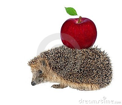 Sitting hedgehog with apple