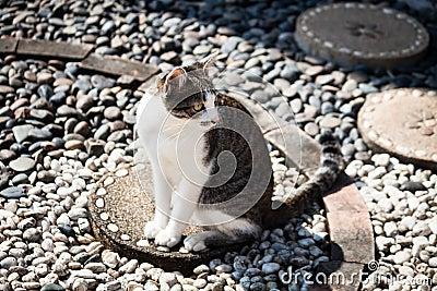 Sitzende Freizeit der Katze