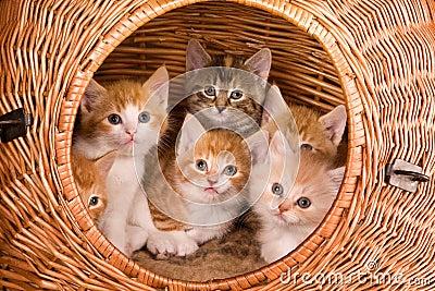 Six in a basket