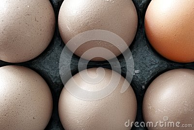 Six Chicken Eggs