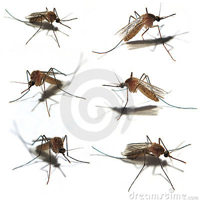 The Six Mosquitoes