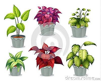 Six non-flowering plants