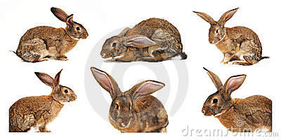 Six rabbits on a white background