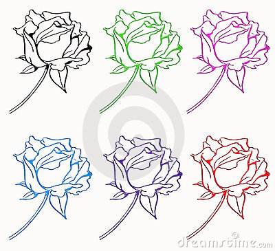 Six rose isolated