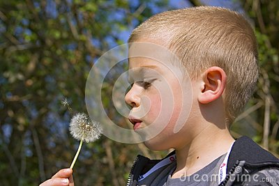 Six year old boy blowing a dandelion