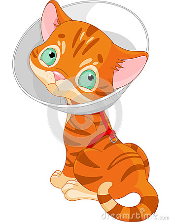 Sjuk gullig kattunge