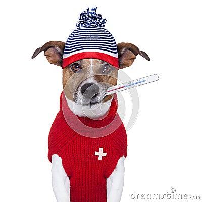 Sjuk sjuk kall hund med feber