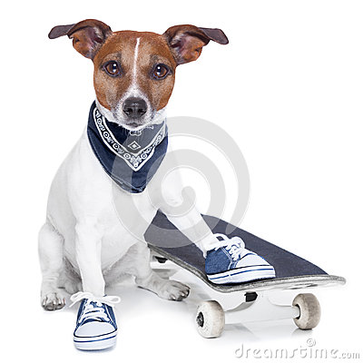 Free Skateboard Dog Stock Images - 35831364