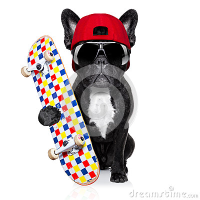 Free Skateboard Skater Dog Royalty Free Stock Photos - 50428288