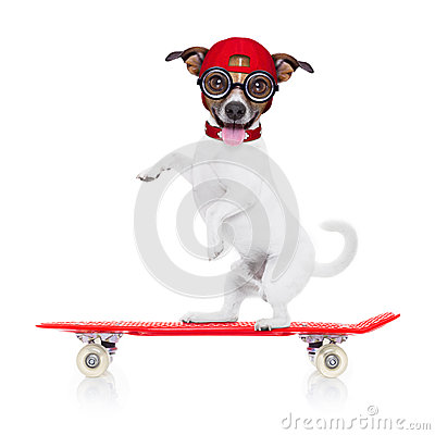 Skater Boy Dog Stock Photo Image 53020236