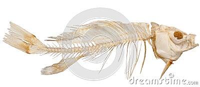 Skelet van vissen