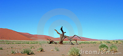 Skeletal carcase of dead tree