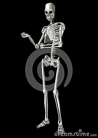 Skeleton . 4