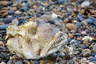 Skeleton big fish