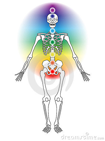 Skeleton with Chakras