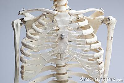 Skeleton chest