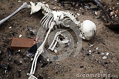 Skeleton in dirt. bones and skull from dead man