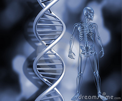Skeleton with DNA strands