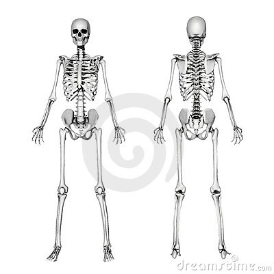 Skeleton Body Drawing