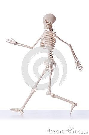 Skeleton isolated