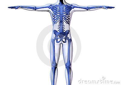 Skeleton of the man