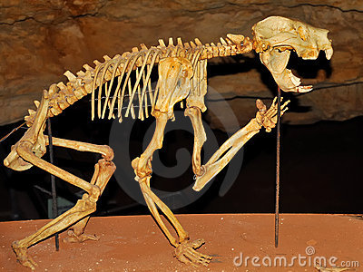Skeleton of a Marsupial Lion in a cave