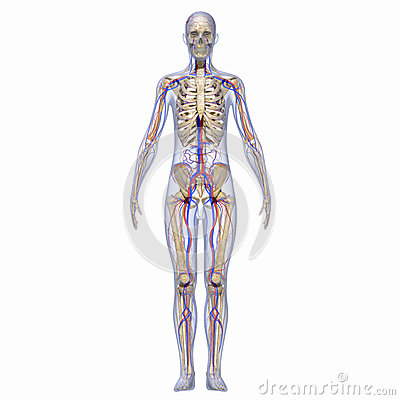 exam for muscular and nervous system Anatomy of the nervous system the nervous system does not work alone to regulate and the somatic nervous system and the autonomic in exam mode: all questions.