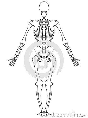 Skeleton: Rear View