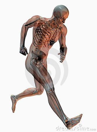 Skeleton of running man