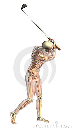 Skeleton with Semi-Transparent Muscles - Golf Swin