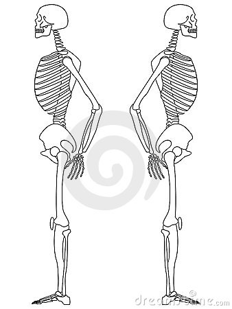 Skeleton: Side View
