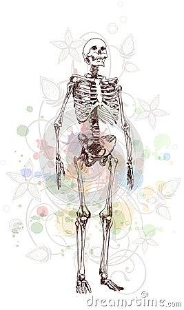 Skeleton sketch & floral calligraphy ornament