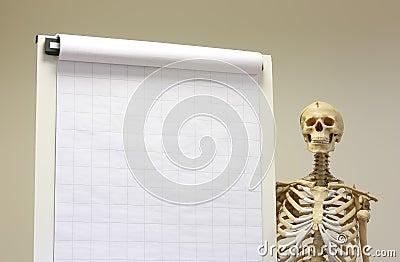 Skeleton student