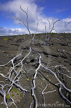 Skeleton Trees, Lava Field, Hawaii