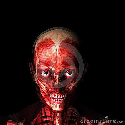 Skeleton X-Ray - Muscles and Brain
