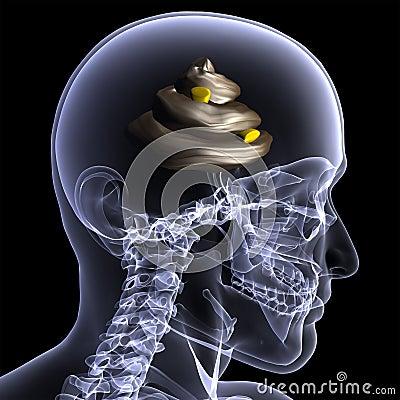Skeleton X-Ray - Shit for Brains