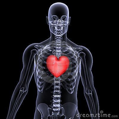 Free Skeleton X-Ray Valentine Heart 2 Royalty Free Stock Photo - 1865085