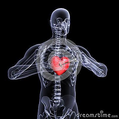 Skeleton X-Ray Valentine Heart 3