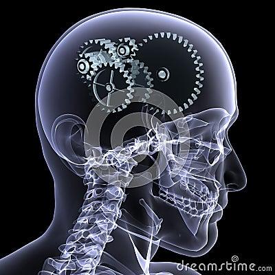 Skeleton X-Ray - Wheels a Turn