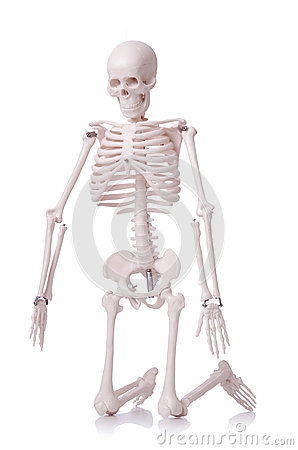 Skelett getrennt