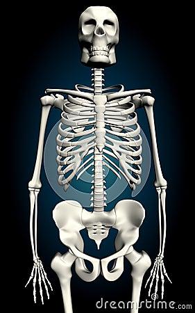 Skelton