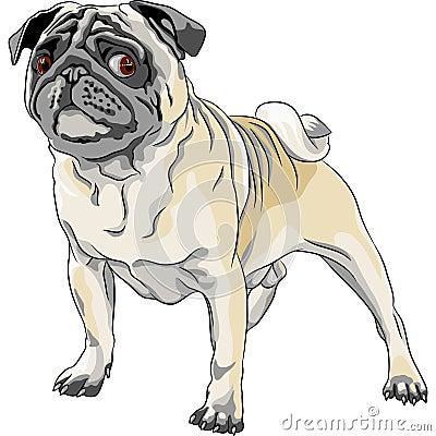 Sketch angry dog pug breed