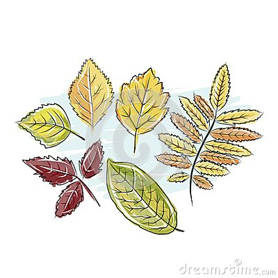 Sketch of autumn leaves for your design