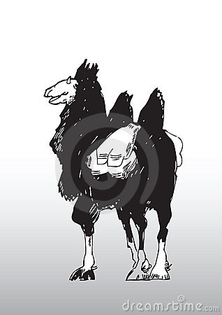 Sketch of a Camel with Saddle