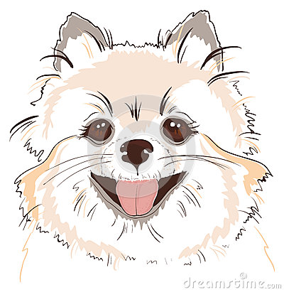 Sketch of cute spitz dog