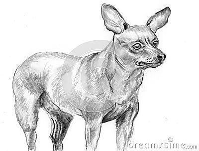 Sketch dog Miniature Pinscher
