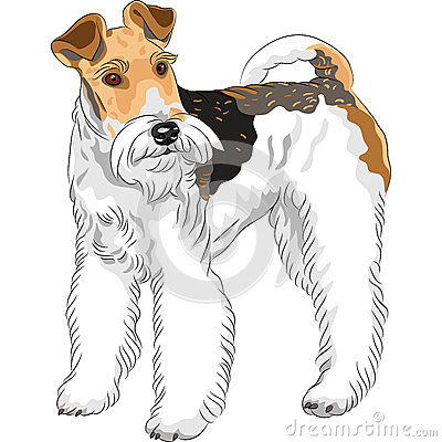 Sketch dog  Wire Fox Terrier breed standing