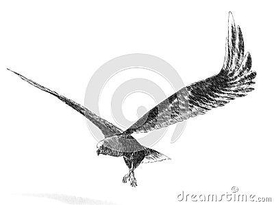 Sketch Eagle