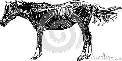 Sketch of horse