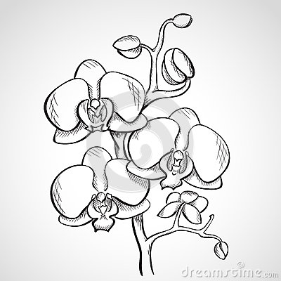 HD wallpapers black and white orchid tattoos